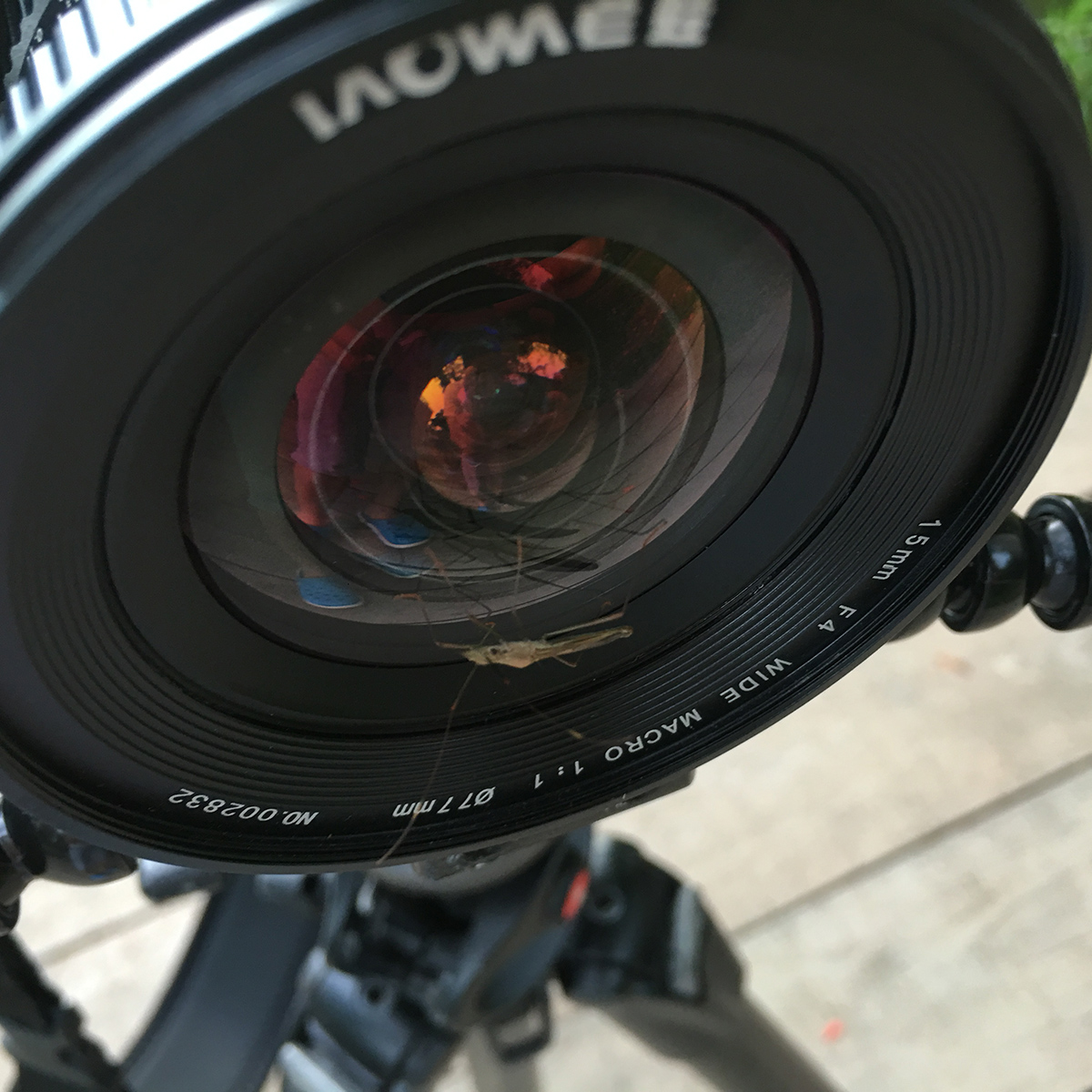Review: Laowa 15mm f/4